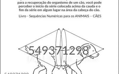 """Grigori Grabovoi – """"Concentração em números para restaurar o corpo de cães"""""""